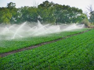 Irrigation-Pulse-6